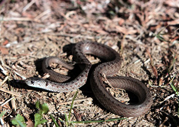 Easton Wildlife Removal Snake